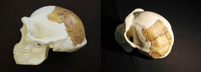Nadaouiyeh skull human fossil