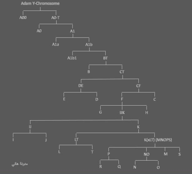 Y-DNA haplogroup tree