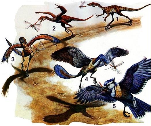 تطور الطيور من الديناصورات