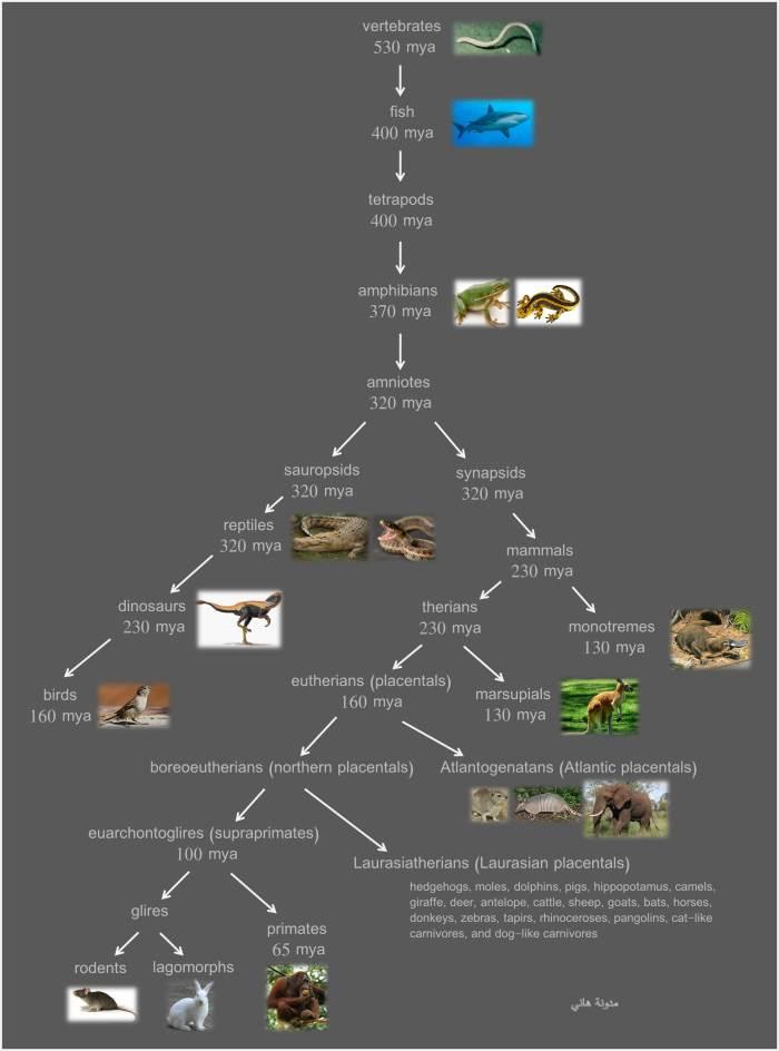 vertebrate evolution tree