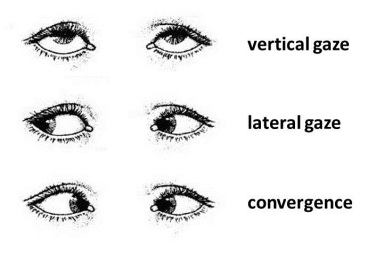 ocular movements eye gaze