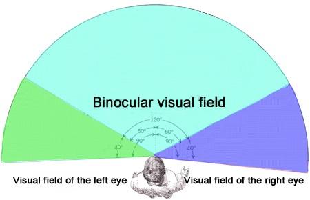 binocular field