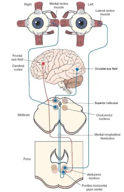 lateral gaze